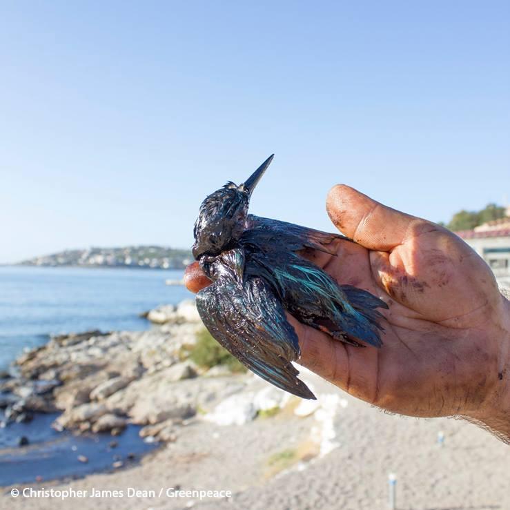 Τηλέφωνα επικοινωνίας για τα θαλάσσια ζωάκια – θύματα της μόλυνσης
