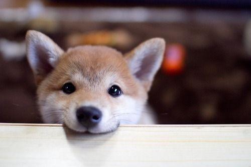 Aύριο η Ημέρα Υιοθεσίας Αδέσποτων Ζώων στο Παλαιό Φάληρο
