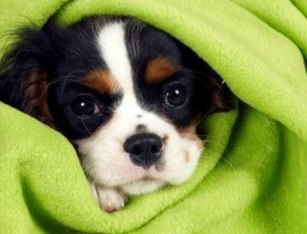 Ο ΣΠΑΖ ζητά κουβέρτες και σπιτάκια εν όψει του χειμώνα