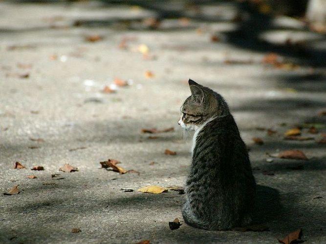 Άλιμος: Dog's Voice και Animal Action θα στειρώσουν 150 αδέσποτες γάτες
