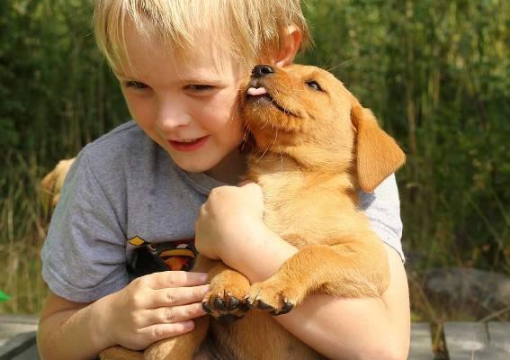 Σεμινάριο «Παιδί και σκύλος» στο Ελληνικό Κέντρο Εκπαίδευσης Σκύλων στον Άλιμο