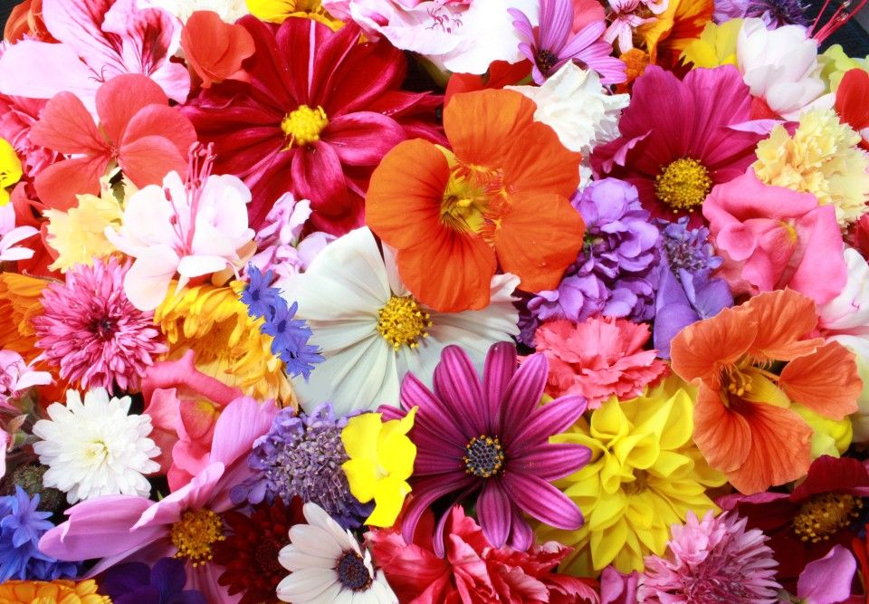 Γιορτή Λουλουδιών: Η Ηλιούπολη γεμίζει λουλούδια