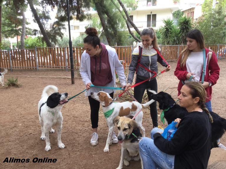 Έρχεται η 2η Γιορτή Υιοθεσίας Σκύλου στον Άλιμο