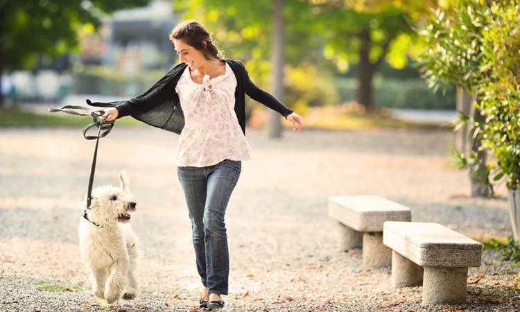 Το φθινόπωρο η επόμενη δράση «Βόλτα με τον σκύλο μου»