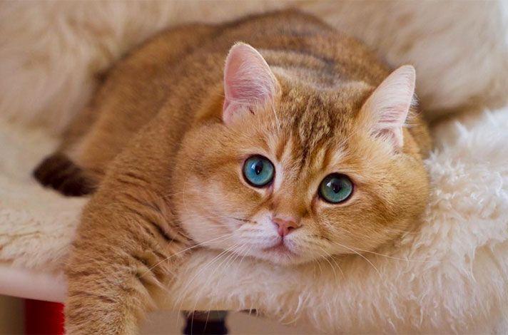 Ψυχοπαθής πυροβολεί γάτες στην Αγία Μαρίνα Ηλιούπολης