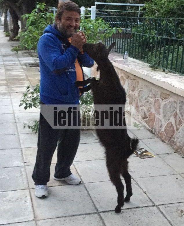 Το κατσικάκι που έχει τρελάνει το Παλαιό Φάληρο με τις βόλτες του