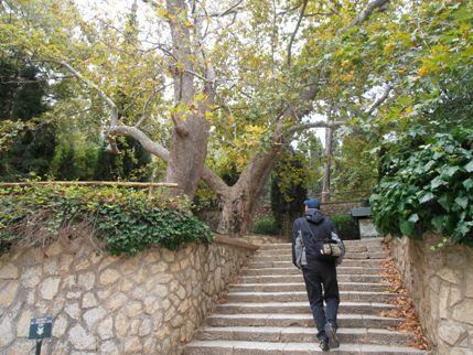 Περίπατος στο δάσος της Καισαριανής, με ειδική τιμή για τους Αλιμιώτες και τις Αλιμιώτισσες