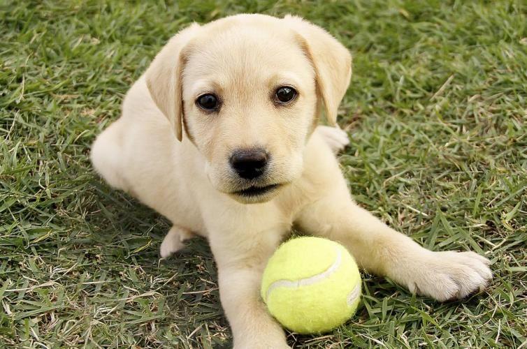 Μαθαίνω να παίζω με τον σκύλο μου: Δωρεάν σεμινάριο στο ΕΚΕΣ στην Λ. Αλίμου