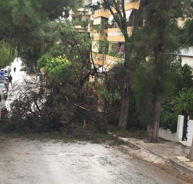 Δέντρο έπεσε στην οδό Λυσικράτους