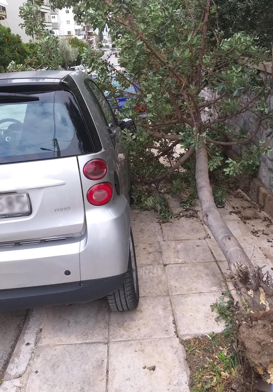Ένα ακόμη δέντρο «υποχώρησε» από τους δυνατούς ανέμους