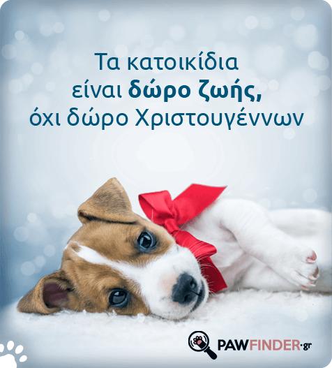Γιατί τα ζωάκια δεν είναι δώρα Χριστουγέννων