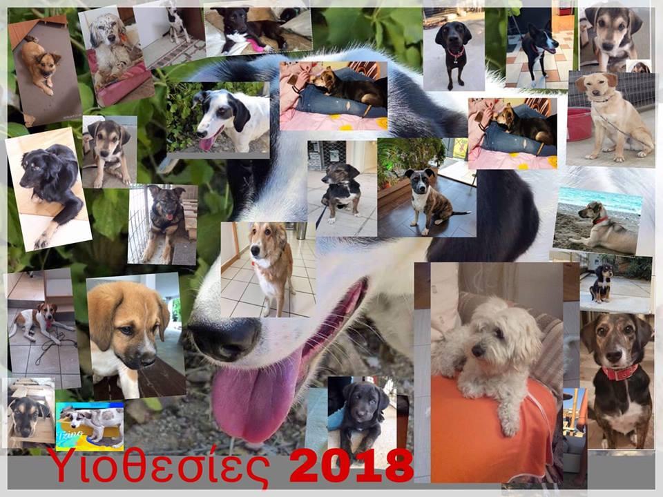 30 αδέσποτα σκυλάκια του ΣΑΖΑ υιοθετήθηκαν το 2018