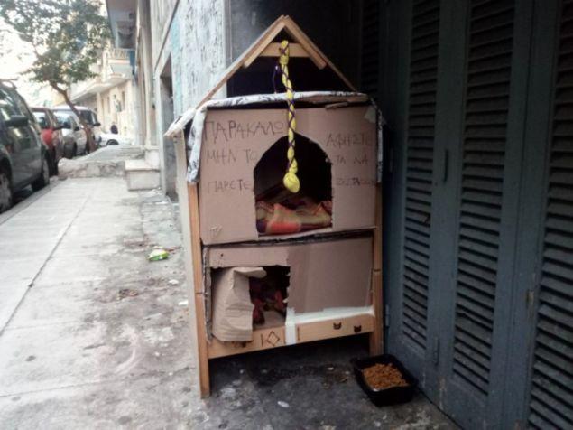 Παράδειγμα προς μίμηση: Στα Πατήσια έφτιαξαν ένα «τριώροφο σπίτι» για τα αδέσποτα γατάκια