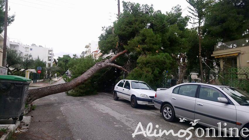 Πτώση δέντρου και διακοπή ρεύματος στην οδό Οδυσσέα Ανδρούτσου