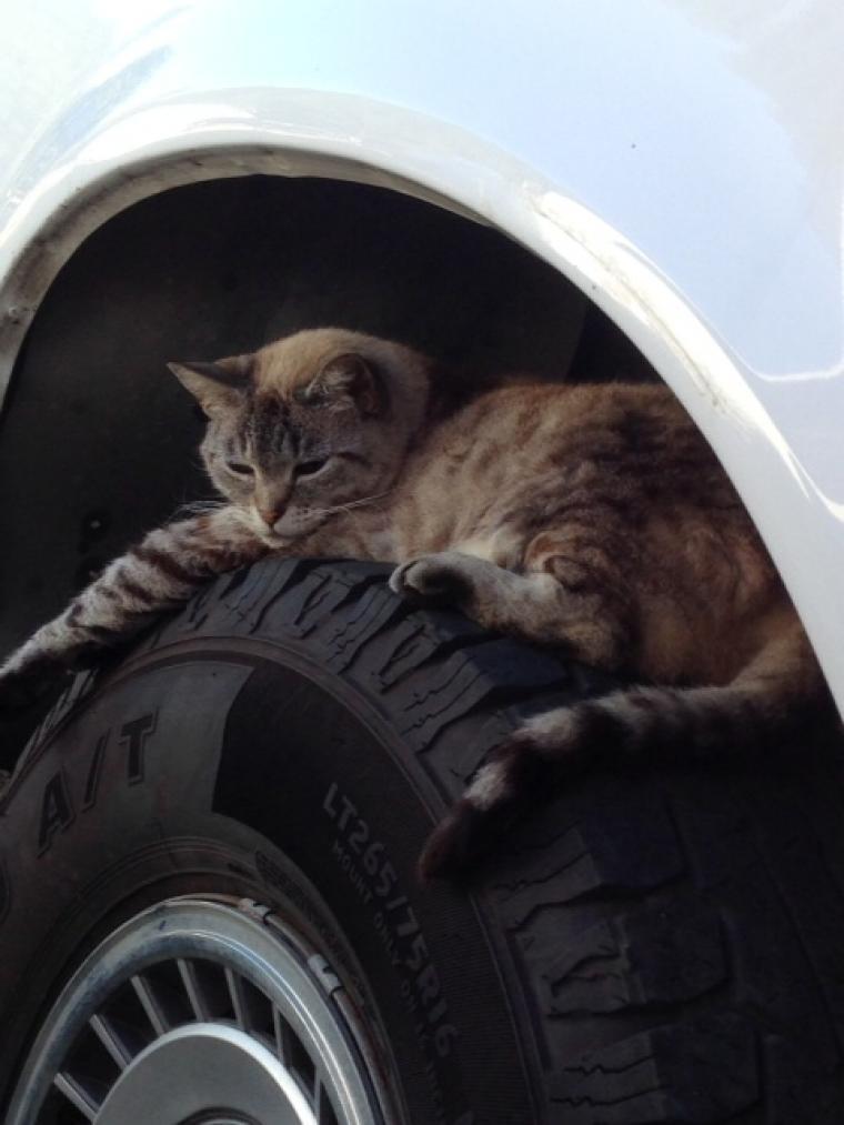 Προσέξτε για τα γατάκια που κουλουριάζονται στα αυτοκίνητα