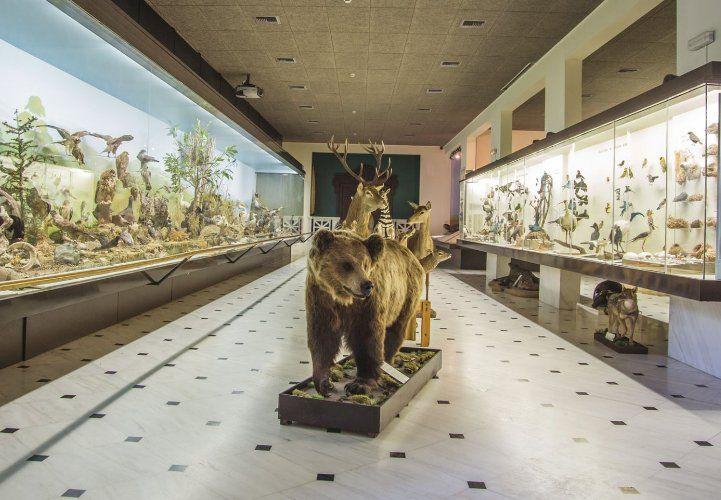 Επίσκεψη στο Μουσείο Γουλανδρή Φυσικής Ιστορίας, με ειδική τιμή για τους Αλιμιώτες