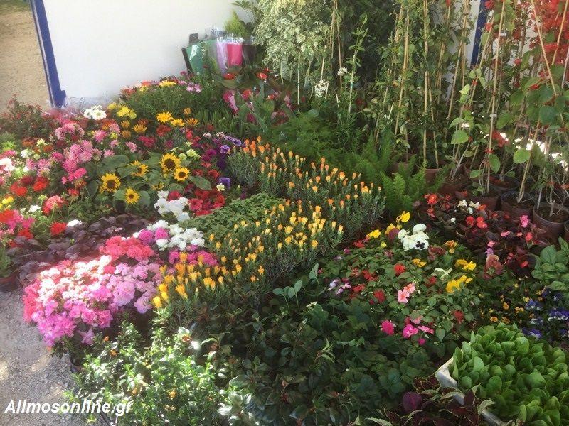 Όλα έτοιμα για τη Γιορτή Λουλουδιών στο Άνω Καλαμάκι