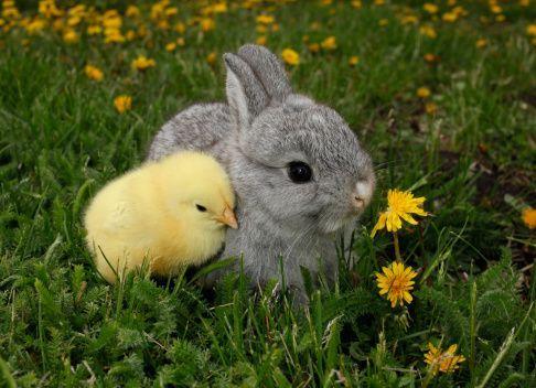 Γιατί να μη χαρίσετε κουνελάκια το Πάσχα - Ξέρατε πως ζουν έως 12 χρόνια;