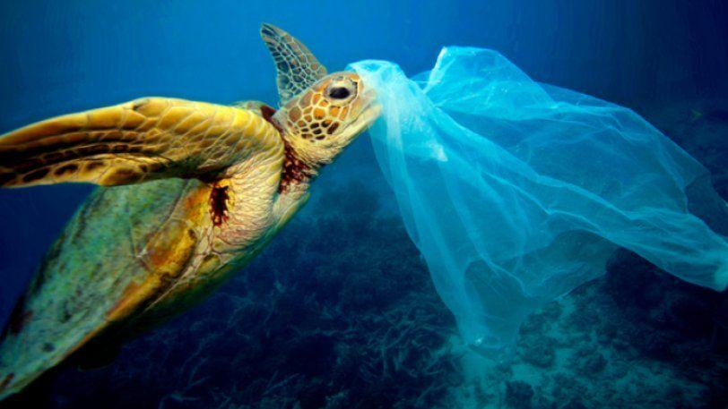 Νέα έρευνα προειδοποιεί πως ο εφιάλτης των πλαστικών απειλεί και τις ελληνικές θάλασσες
