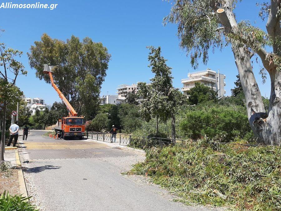 Κλαδεύονται οι ευκάλυπτοι της οδού Αγίου Δημητρίου στο Καλαμάκι