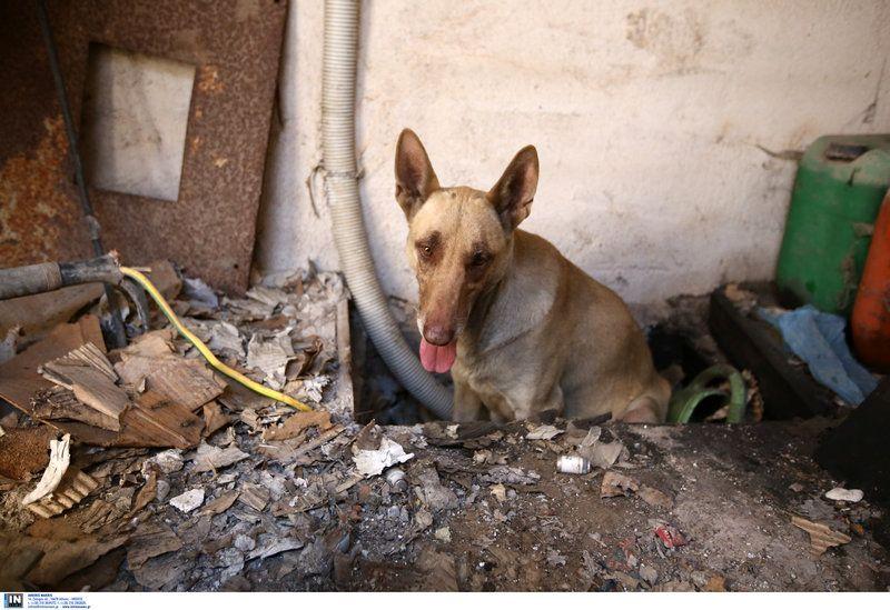 Φωτιά στον Υμηττό: Η σκυλίτσα που προστάτευσε τα κουταβάκια της από τη φωτιά