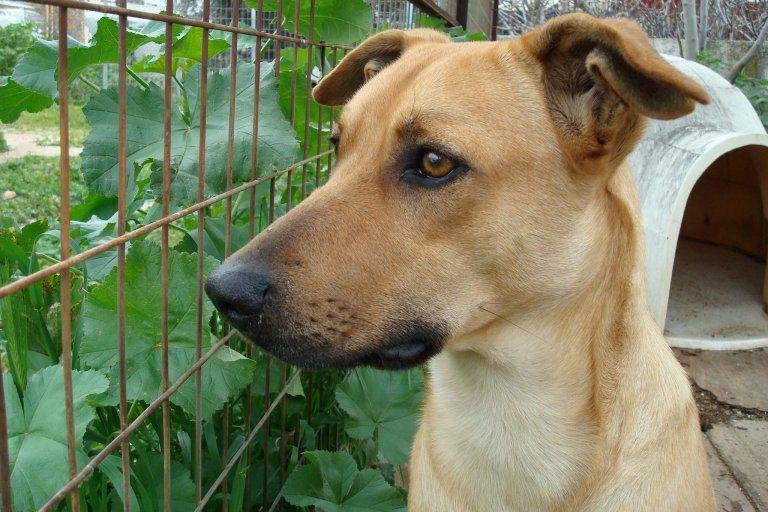 Το μήνυμα του ΣΠΑΖ για όσους θέλουν να «φέρουν τα αδέσποτα ζωάκια στην Αθήνα ώστε να σωθούν»