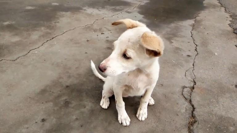 ΣΑΖΑ: Τα ηλικιωμένα σκυλάκια του Αλίμου χρειάζονται ένα προσωρινό σπίτι για τον χειμώνα