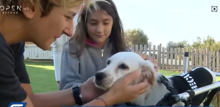 Βάρκιζα: Μαθητές υιοθέτησαν ανάπηρο σκυλάκι