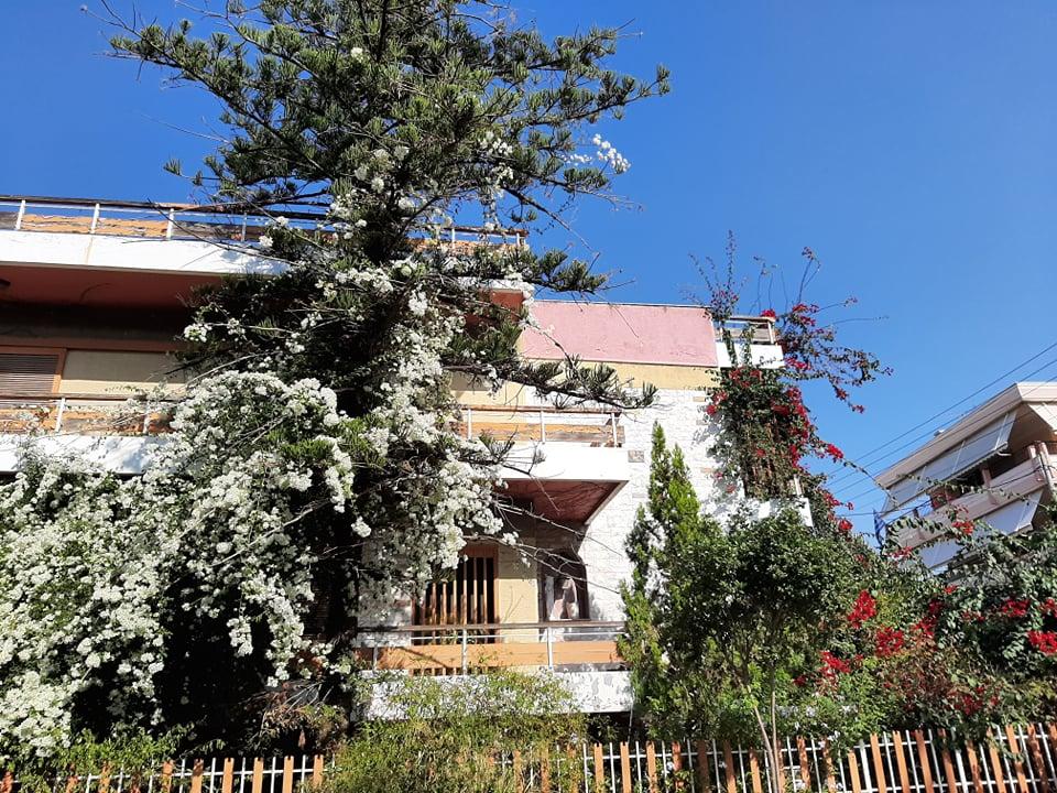 Οι ροζ και άσπρες βουκαμβίλιες που «αγκαλιάζουν» αυτό το σπίτι του Καλαμακίου