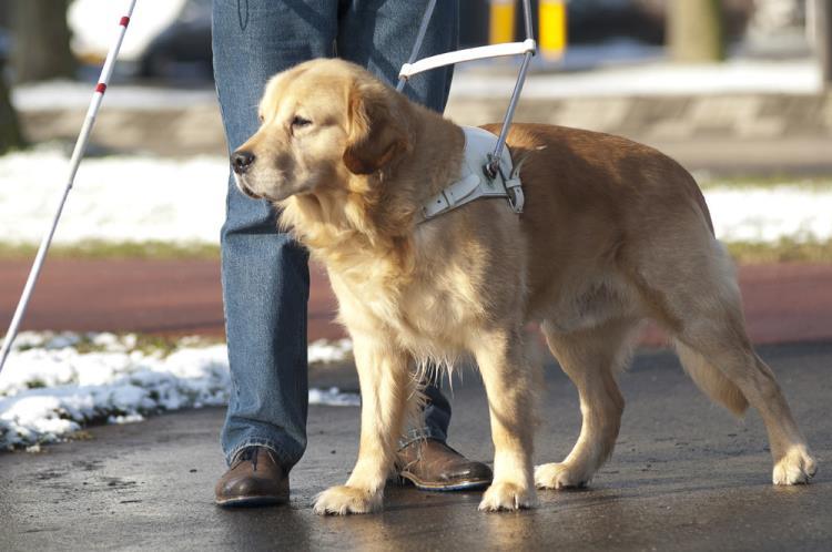 Ενημερωτική εκδήλωση με θέμα τους σκύλους οδηγούς για τα άτομα με οπτική αναπηρία