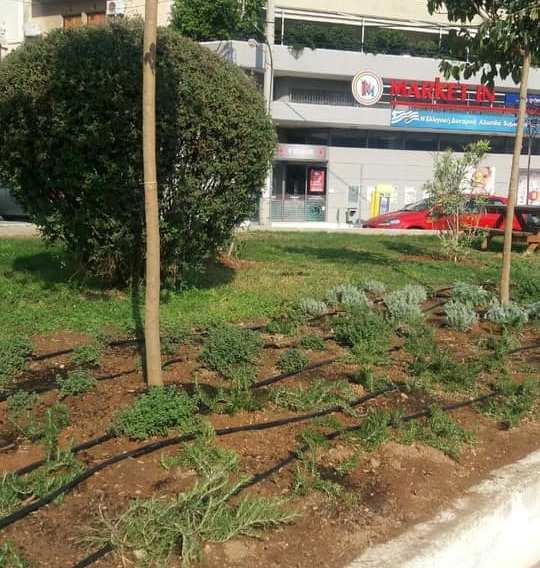 Κλέψανε φυτά από την πλατεία Αλ. Παναγούλη