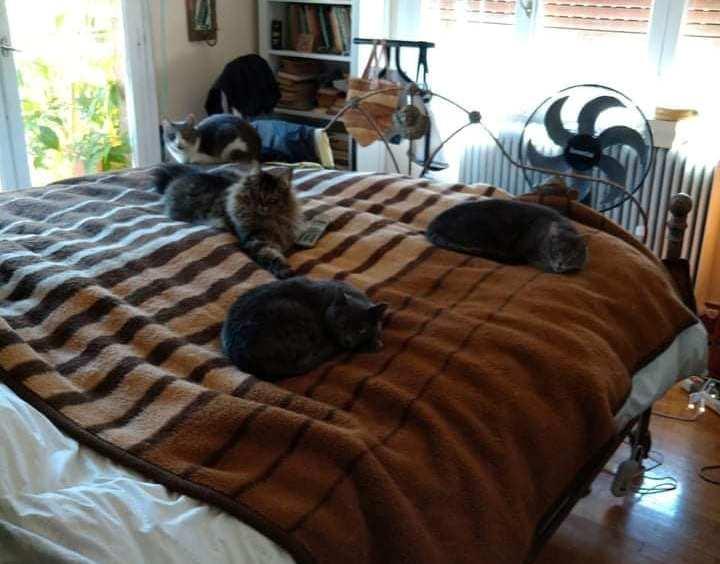 Έξι γάτες αναζητούν επείγουσα υιοθεσία