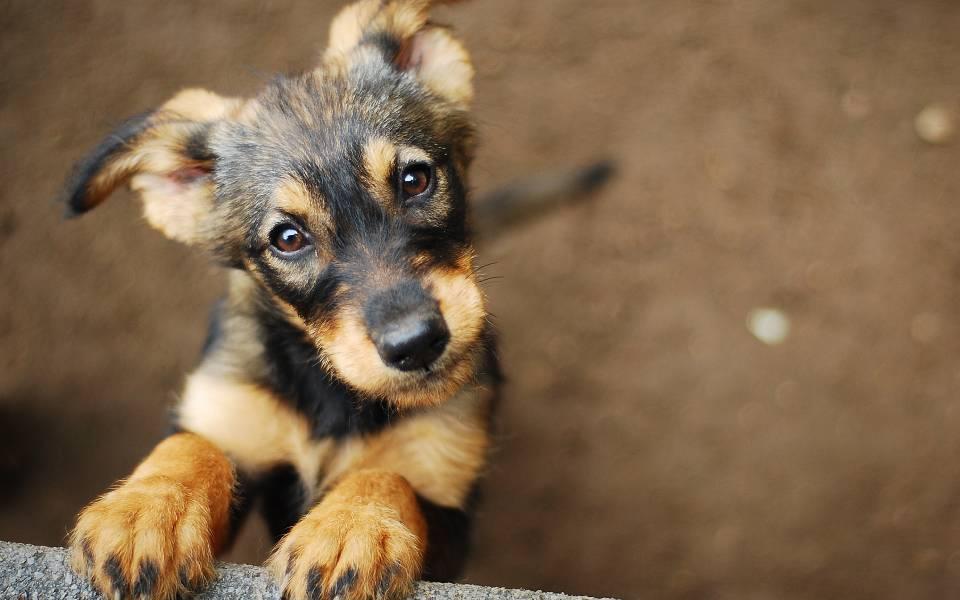 Animal Solidarity Gr: Η νέα πλατφόρμα του Υπουργείου Εσωτερικών για τα αδέσποτα ζώα