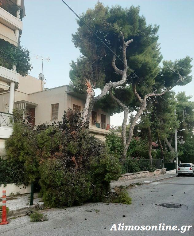 Πτώση δέντρου στο Καλαμάκι