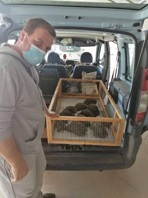 Η ΑΝΙΜΑ συνεχίζει να μαζεύει χελώνες από το εργοτάξιο του πρώην αεροδρομίου