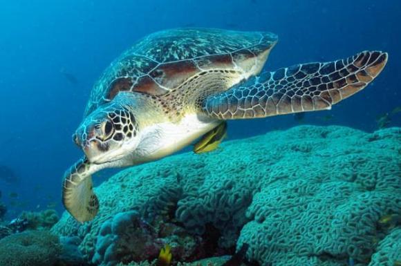Νεκρή βρέθηκε μία θαλάσσια χελώνα στον Άγιο Κοσμά