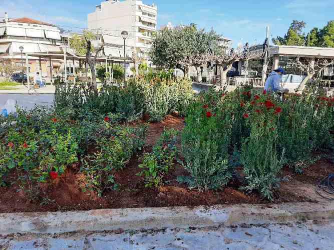 Περισσότερα από 6.000 φυτά θα «πρασινίσουν» την πλατεία Καραϊσκάκη