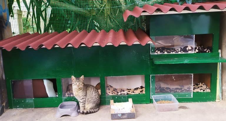 Ένα «συγκρότημα κατοικιών» για γάτες στο Παλαιό Φάληρο