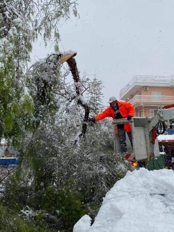Απομακρύνθηκαν από τους δρόμους της πόλης όλα τα σπασμένα δέντρα και μεγάλα κλαδιά