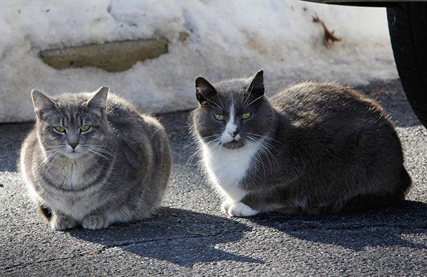 Νέα Σμύρνη: Άγνωστοι έκλεψαν τα σπιτάκια που είχαν τοποθετήσει εθελοντές για τις αδέσποτες γάτες