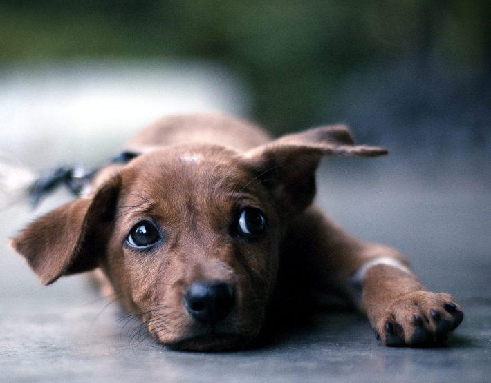 Η ανακοίνωση της Ζωοφιλικής Ένωσης Ηλιούπολης σχετικά με το καταφύγιο αδέσποτων ζώων