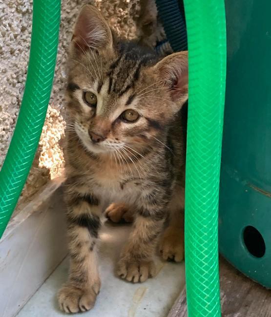 Το γατάκι που απεγκλωβίστηκε από φρεάτιο του Αλίμου ψάχνει σπίτι