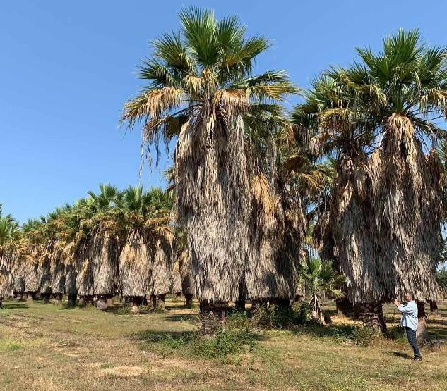 2.500 δέντρα θα φυτευτούν σε Βούλα, Βάρη και Βουλιαγμένη