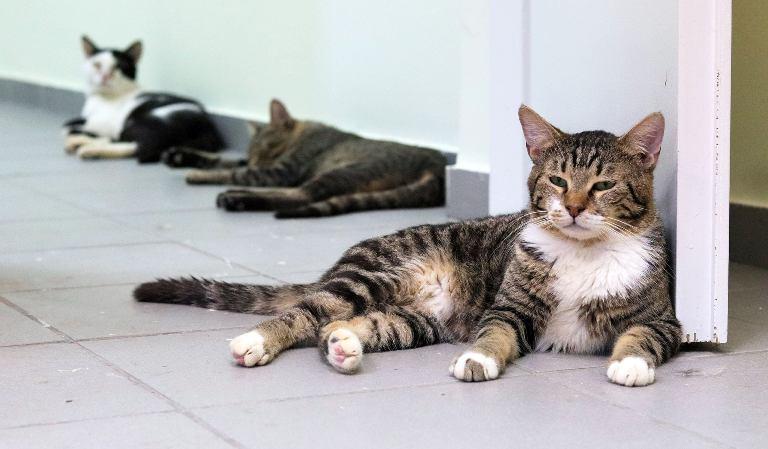Απομακρύνθηκαν 13 γάτες από σπίτι στον Άγιο Δημήτριο καθώς οι συνθήκες διαβίωσης ήταν πολύ άσχημες