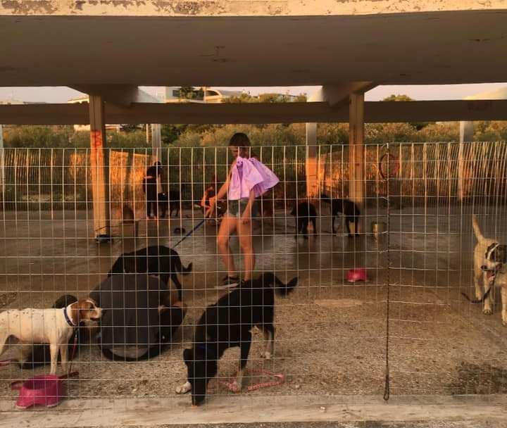 Υιοθετήθηκαν τα πυρόπληκτα ζωάκια που φιλοξενούνταν σε προσωρινό χώρο στη Β' Πλαζ Βούλας