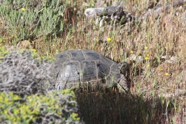 Δράση απομάκρυνσης χελωνών και άλλων ερπετών στο Ελληνικό