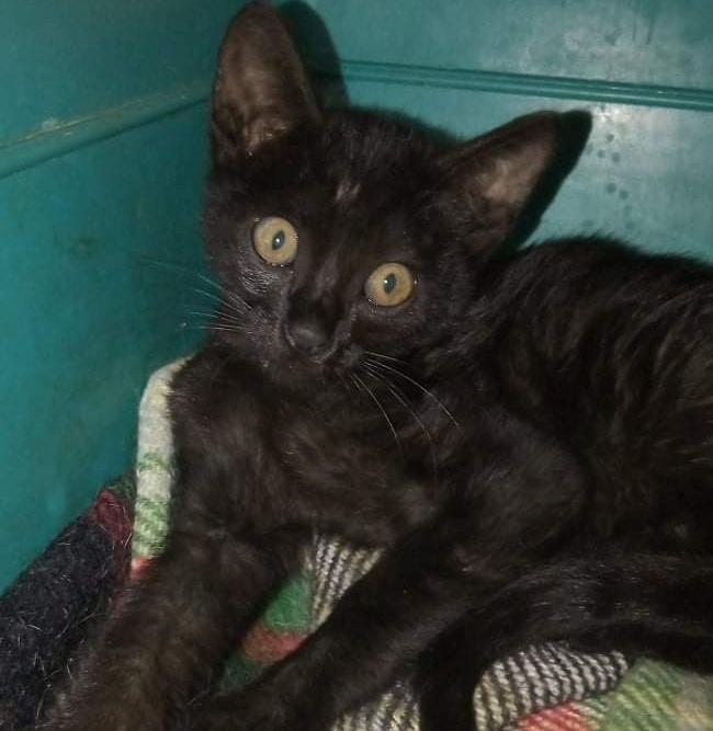 Ένα Αλιμιωτάκι έσωσε αυτό το αδέσποτο γατάκι που ήταν σε άσχημη κατάσταση κατά τη διάρκεια της βροχής